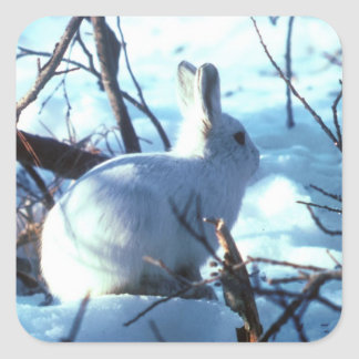 Arctic Hare in Snow Square Sticker