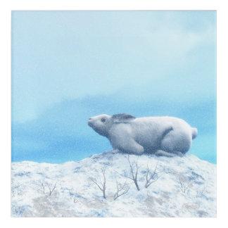 Arctic hare, lepus arcticus, or polar rabbit acrylic wall art