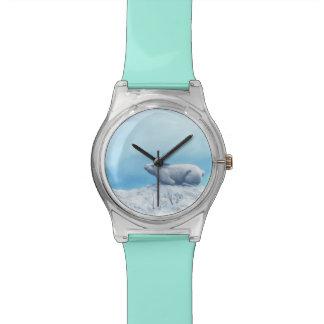 Arctic hare, lepus arcticus, or polar rabbit watch