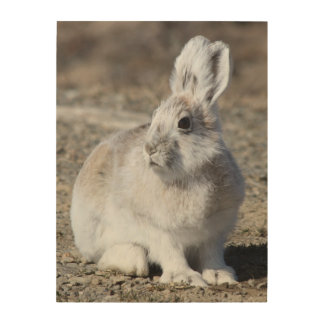 Arctic hare wood wall art