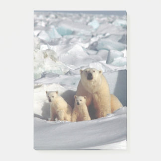 Arctic Polar Bears Mother Cubs Post-It-Notes Post-it Notes