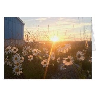 arctic sunset notecard