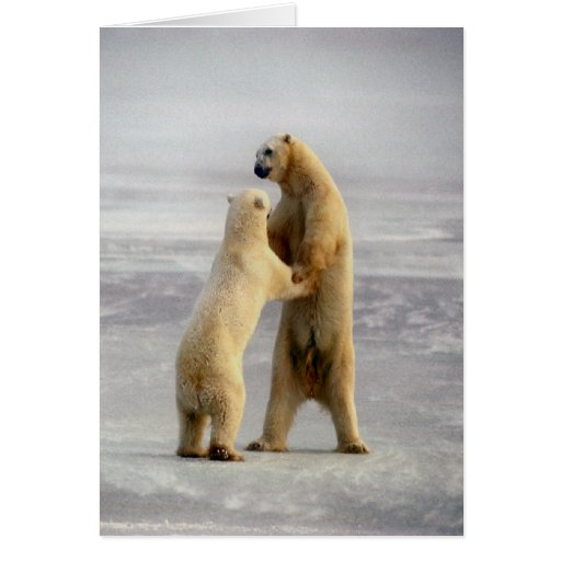 Arctic Waltz Greeting Cards