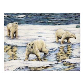 Arctic Wanderers Postcard