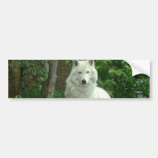 Arctic Wolf Bumper Sticker