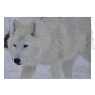 Arctic Wolf Card