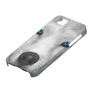 Arctic Wolf iPhone 5 Case