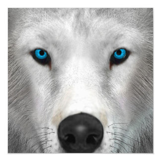 Arctic Wolf Magnetic Invitations