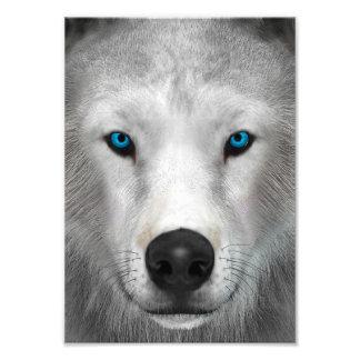 Arctic Wolf Photo Print
