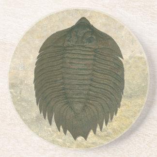 Arctinrus Boltoni Fossil Trilobite Coaster