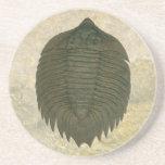 Arctinurus Boltoni Trilobite Beverage Coaster