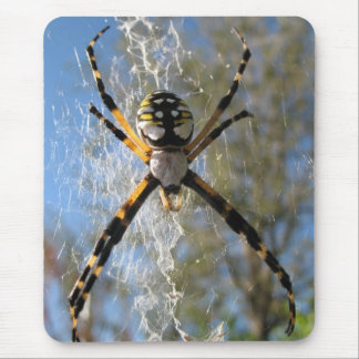 Argiope spider mouse pad