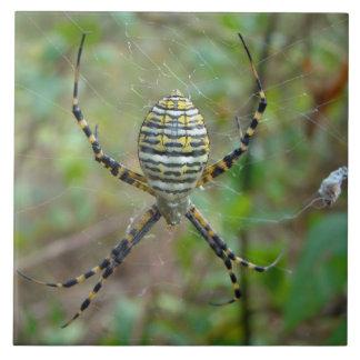 Argiope trifasciata Orb Weaver Spider Ceramic Tile