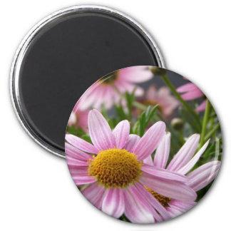 Argyranthemum frutescens Marguerite Daisies Magnet