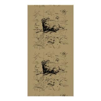 Aries Constellation Map Hevelius circa 1690 Personalized Photo Card