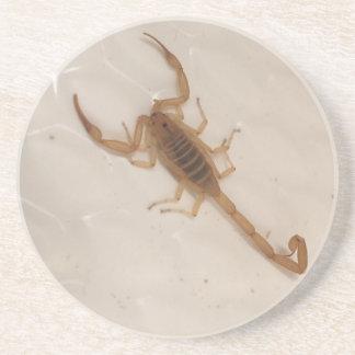Arizona Bark Scorpion Drink Coasters