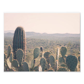 Arizona Cacti | Photo Print