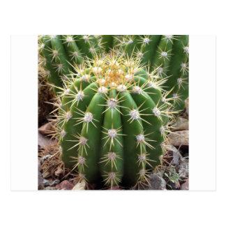 Arizona Cactus Postcard