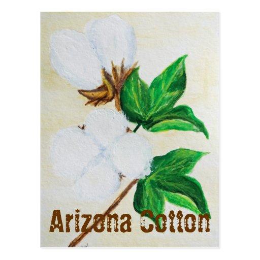 Arizona Cotton Facts Postcard