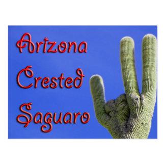 Arizona Crested Saguaro Postcard