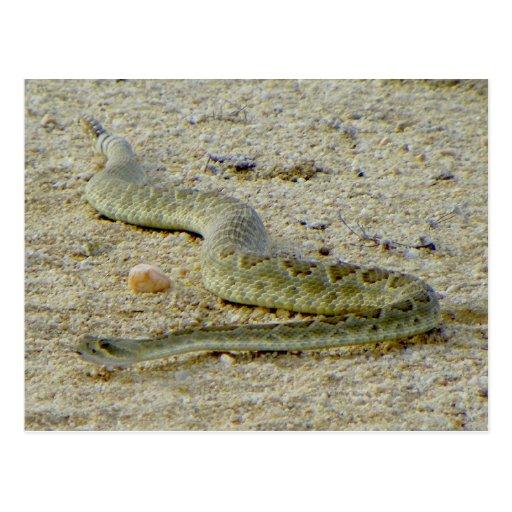 Arizona Desert Mojave Rattlesnake Post Card