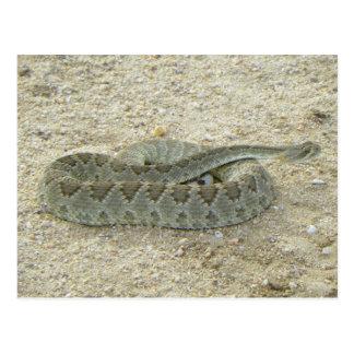 Arizona Desert Mojave Rattlesnake Postcard