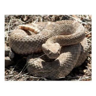 Arizona Diamondback Rattlesnake Postcard