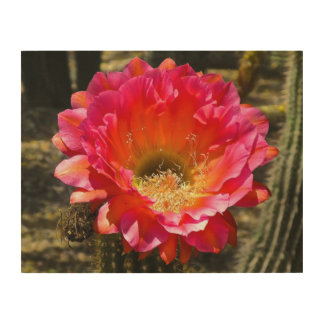Arizona flower Wood Wall Art