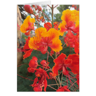Arizona Flowers Card