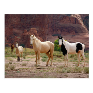 Arizona, Navajo Indian Reservation, Chinle, Postcard
