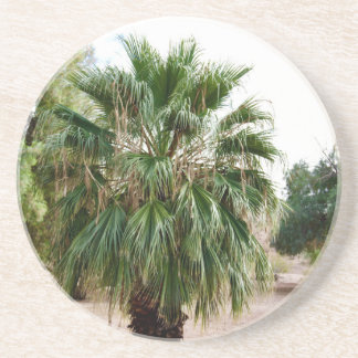 Arizona Palm Coaster