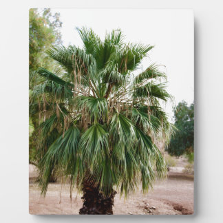Arizona Palm Plaque