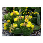 Arizona Postcard, Prickly Pear Cactus Postcard