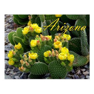 Arizona Postcard, Prickly Pear Cactus Postcard