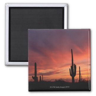 Arizona sunset over saguaro cacti square magnet