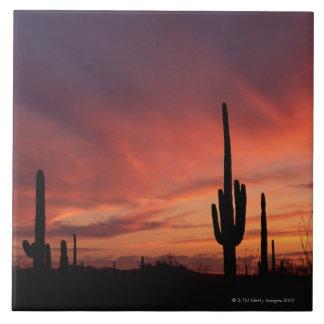 Arizona sunset over saguaro cacti tile