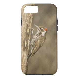 Arizona Woodpecker, Dendrocopos arizonae, South iPhone 7 Case