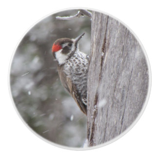 Arizona Woodpecker in the Snow Ceramic Knob