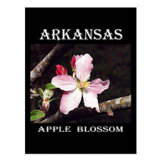 Arkansas Apple Blossom Postcard