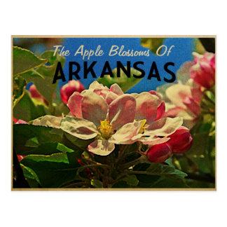 Arkansas Apple Blossoms Postcard