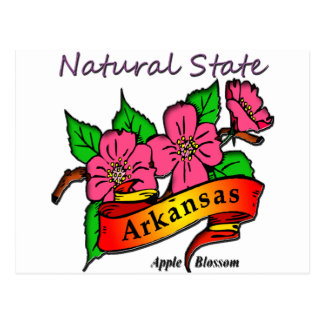Arkansas Natural State Apple Blossom Postcard