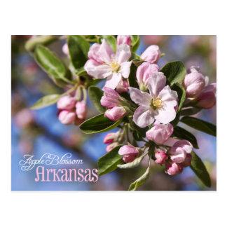 Arkansas State Flower: Apple Blossom Postcard