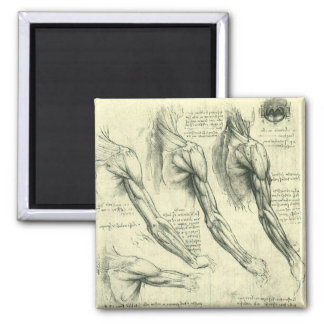 Arm and Shoulder Anatomy by Leonardo da Vinci Magnet