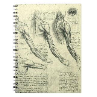 Arm and Shoulder Anatomy by Leonardo da Vinci Notebooks
