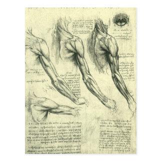 Arm and Shoulder Anatomy by Leonardo da Vinci Postcard