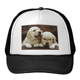Armant Puppy Dogs Cap