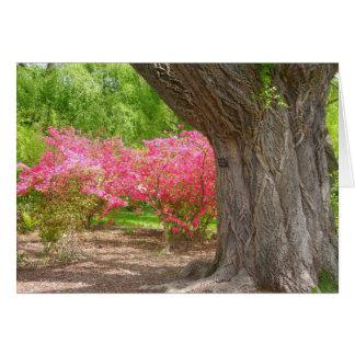 Arnold Arboretum in Spring Card
