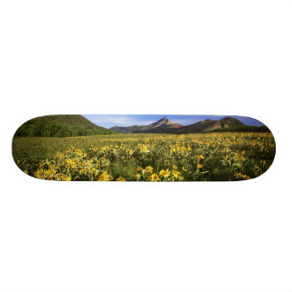 Arrowleaf balsomroot covers the praire with 20 cm skateboard deck