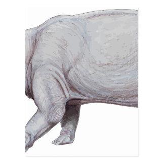 Arsinoitherium Postcard