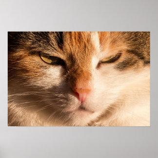 Art poster portrait of a cream cat